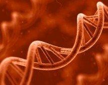 Qual a evidência genética para a evolução humana?