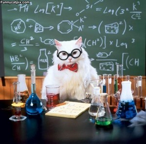 Professor_Cat-300x296