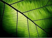 """Resposta ao """"Deus criou as plantas antes do sol. Mas elas não sobrevivem sem fotossíntese"""""""