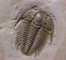 Que evidências temos para a evolução além de fósseis e genes?