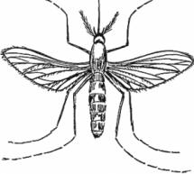 Por que Deus fez os mosquitos